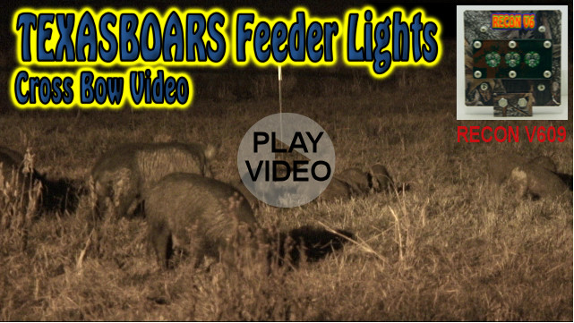 wild boar hunting video with a TexasBoars Feeder Light