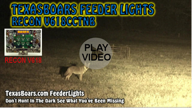 hog hunting video with a TexasBoars Feeder Light